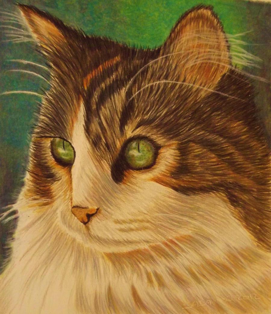 cat by shirls-art