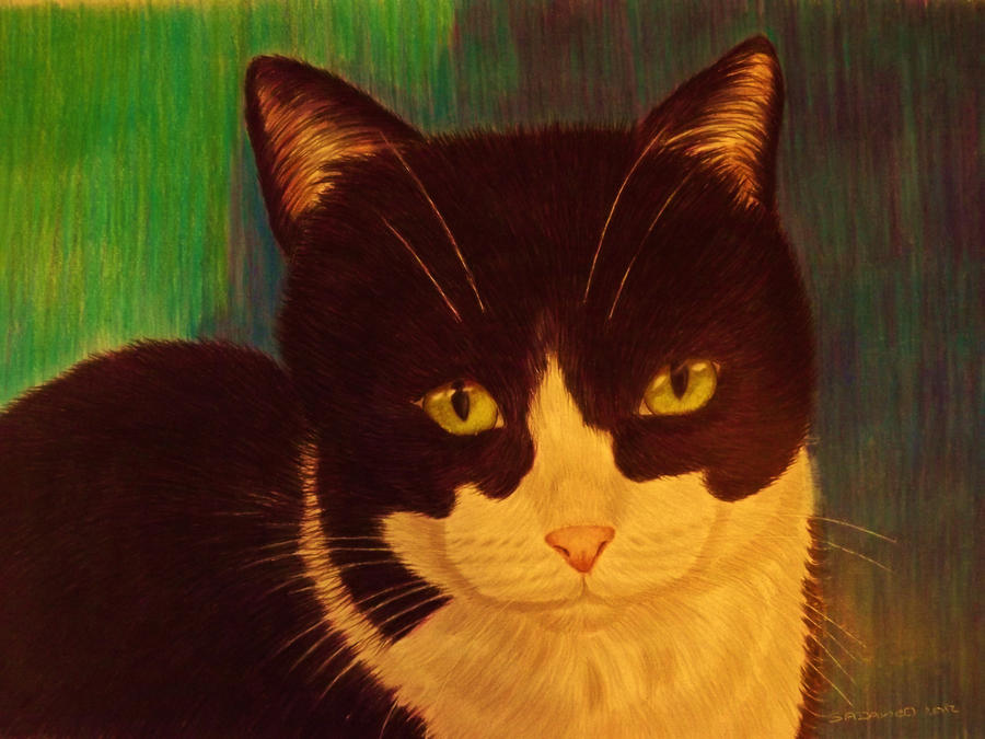 black and white cat by shirls-art