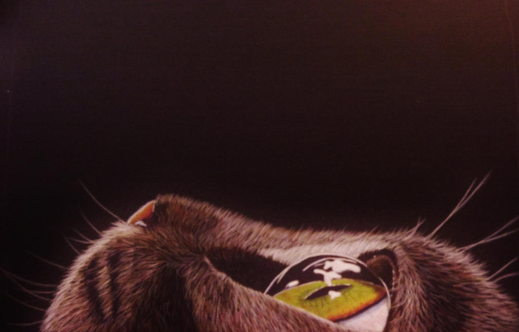 cat eye 2 by shirls-art