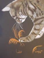 Bengal kitten by shirls-art