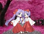 Hiiragi Twins loves Sakuras