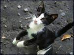 Kitten from Batumi