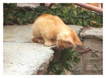 ..:Kitten:.. by Nailo