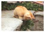 ..:Kitten:..