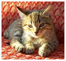 ...:Kitty:... by Nailo