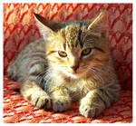...:Kitty:...