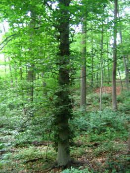 Stock Vine Tree 1