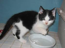 SPLASH kitten stock
