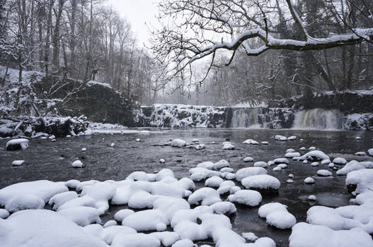 Linn Park in Snow
