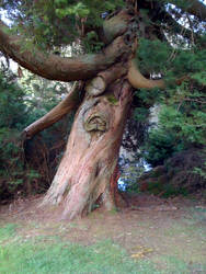 Tree Face by odingraphics