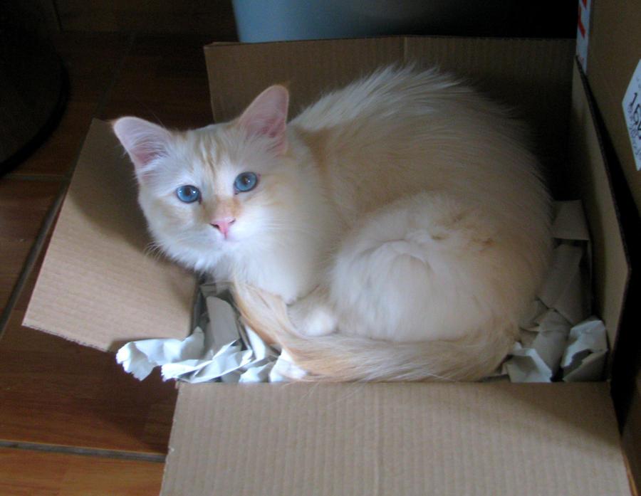 Schrodinger's cat... by Siluan-stock