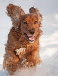 Snow Dog IV by Aenkill