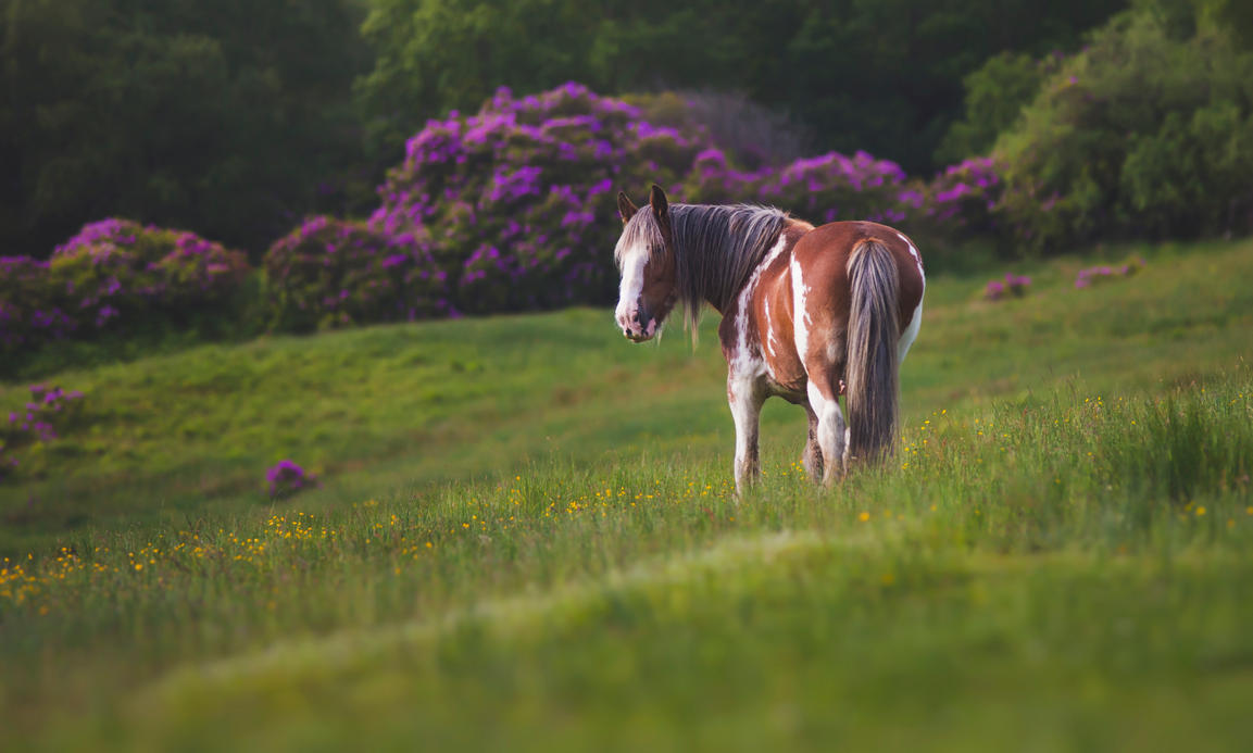 Horse - loch Lomond by Aenkill