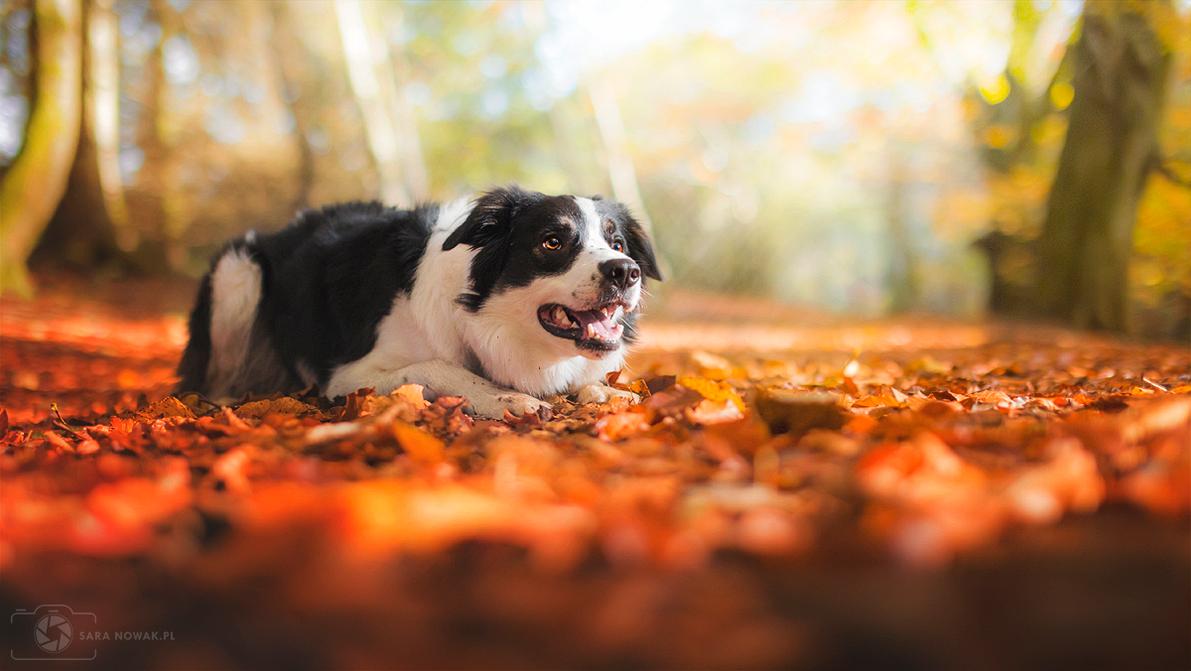 Autumn by Aenkill