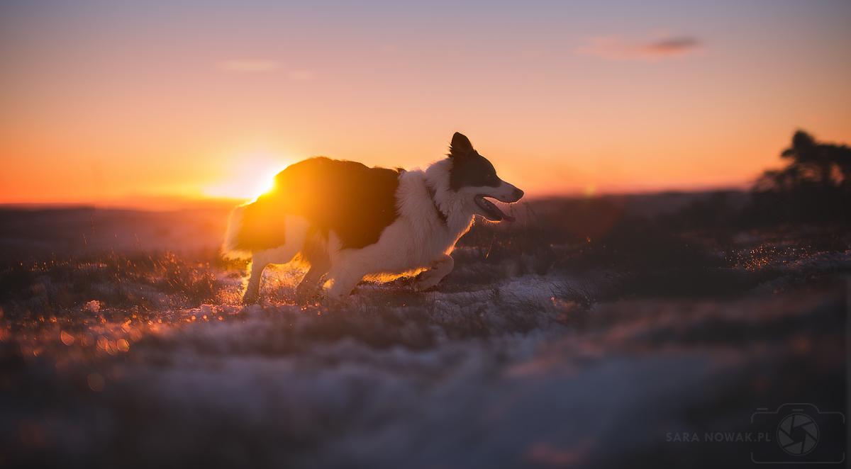 Frosty morning II by Aenkill