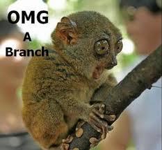 OMG! A branch! by sierrashorses