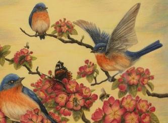 Eastern Blue Birds by SigridNeilsen
