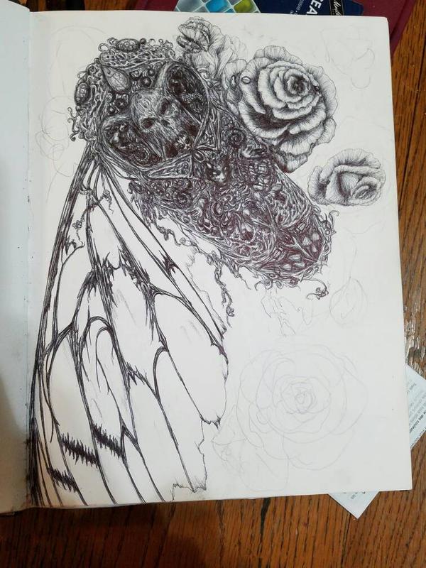 cicada  by SigridNeilsen