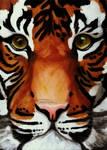 Tiger in Oil