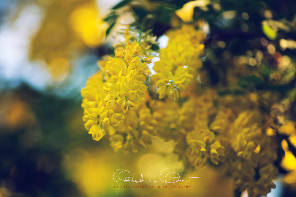 YELLOW + GOLD by Krissey