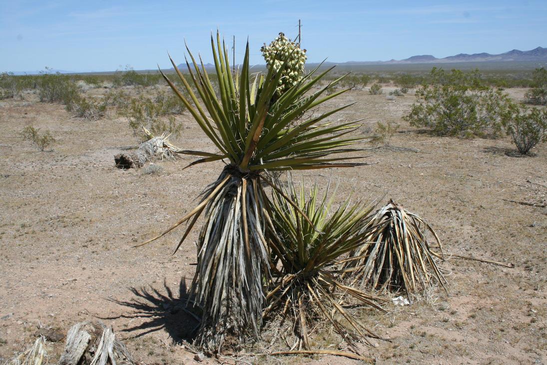 plante dans le desert by nanaf22 on deviantart. Black Bedroom Furniture Sets. Home Design Ideas