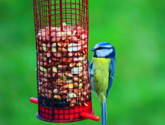 Bird by Wild-Theory