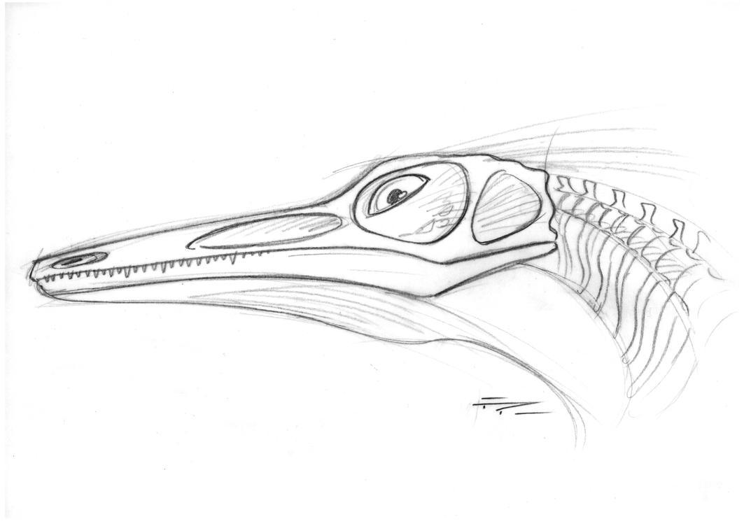Unenlagia comahuensis rough by PaleoPastori