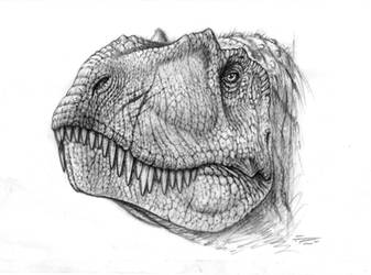 Albertosaurus sketch by PaleoPastori