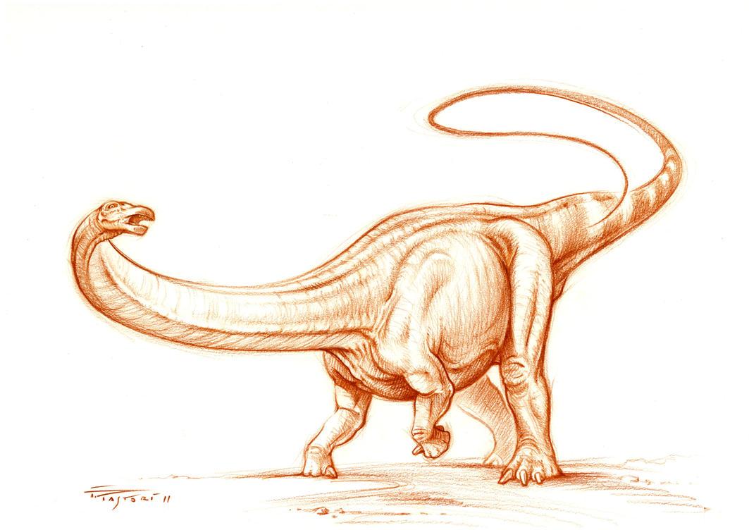 Apatosaurus ajax sketch by PaleoPastori on DeviantArt