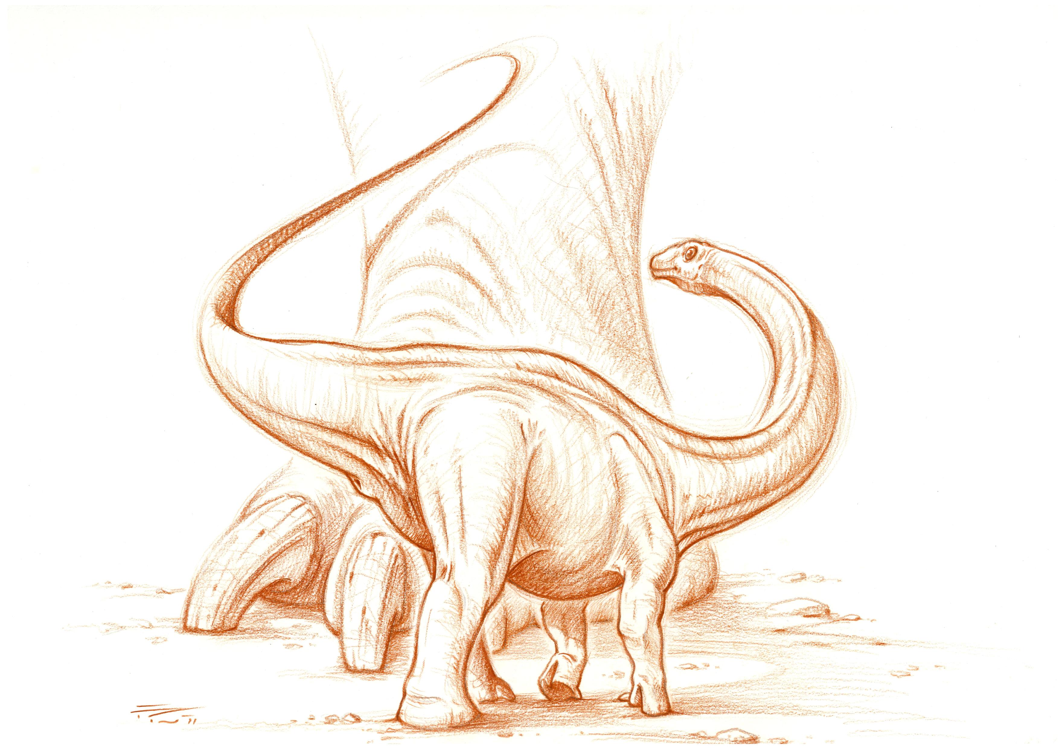 baby Apatosaurus ajax sketch by PaleoPastori on DeviantArt