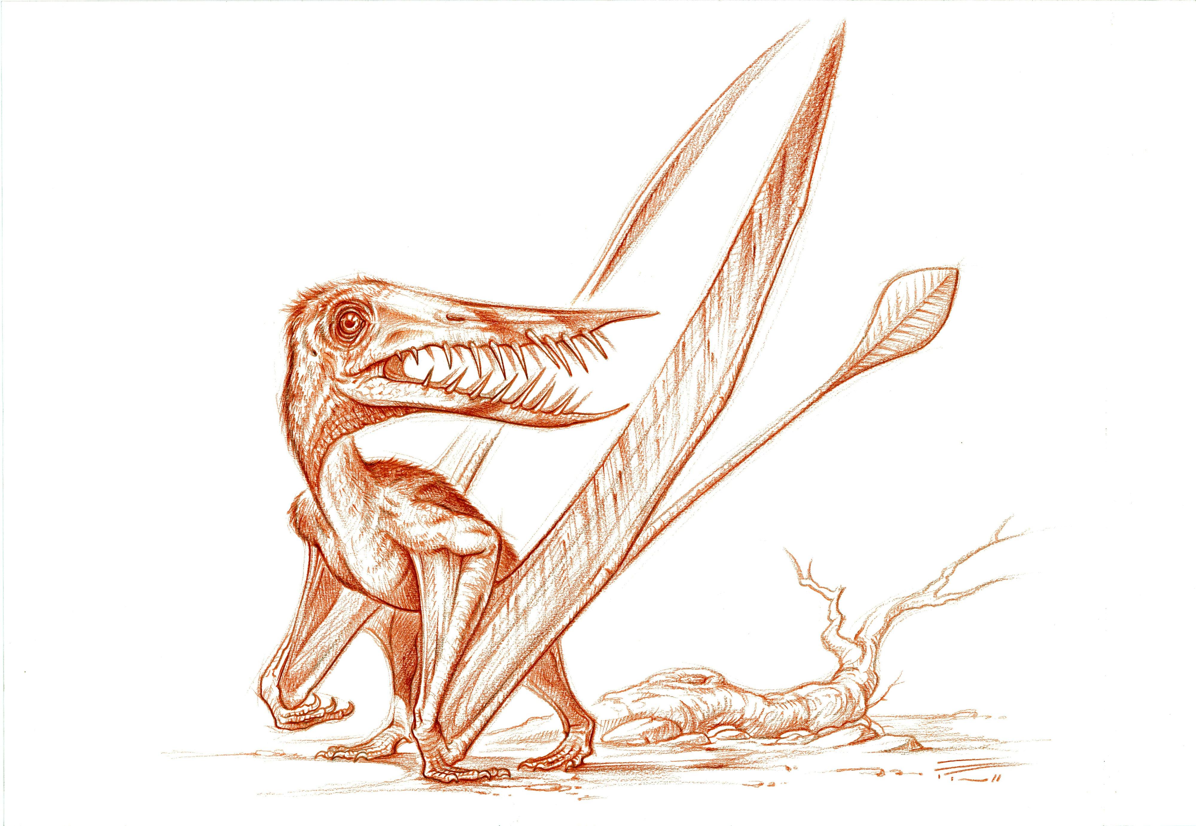 Rhamphorynchus by PaleoPastori