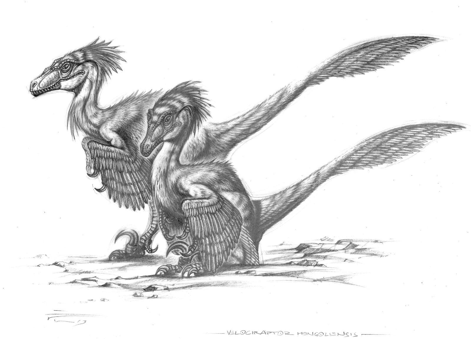 Velociraptor Mongoliensis By Paleopastori On Deviantart