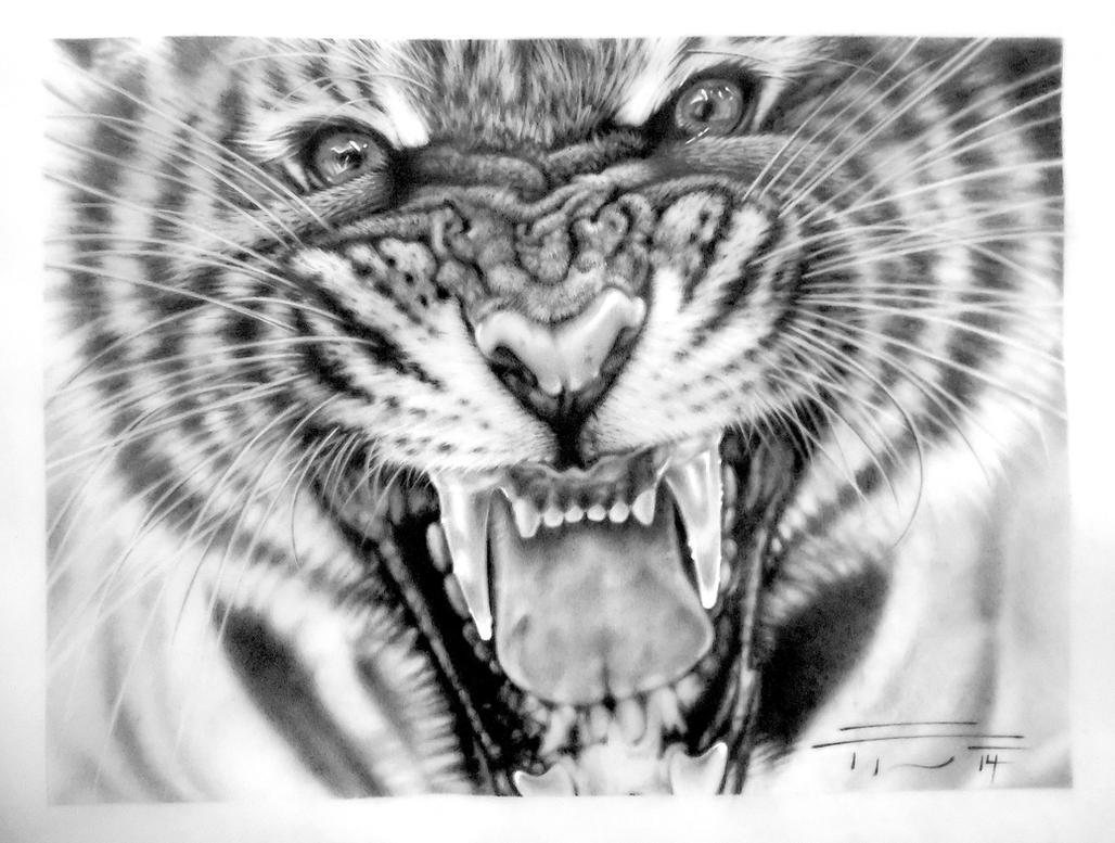 Tiger (Panthera tigris) by PaleoPastori