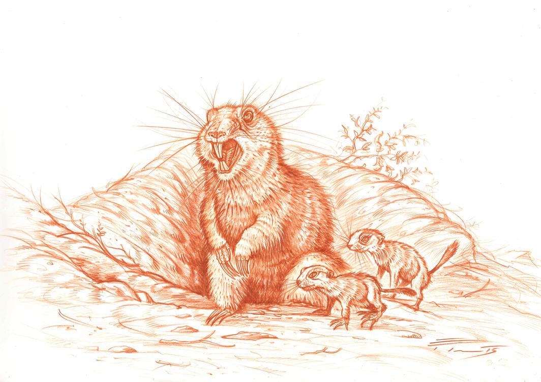 Prairie Dog by PaleoPastori