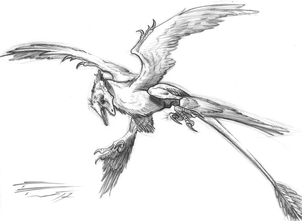 Microraptor gui    IVPP V 13352 by PaleoPastori