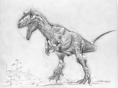 Allosaurus MOR 693