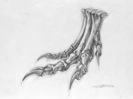 Allosaurus jimmadseni (MOR 693)s