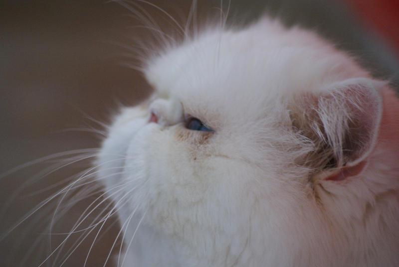 Meow by bOnEdRoP
