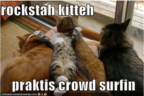 Rocker kitteh by MissnDtown