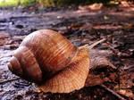 A little snail, a big world - Poland by YakuzaKuroi