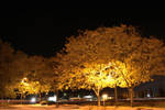 Autumn Trees in a Parking Lot by wagn18