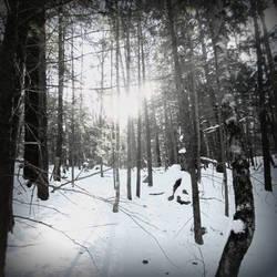 A Bleak Winter by wagn18