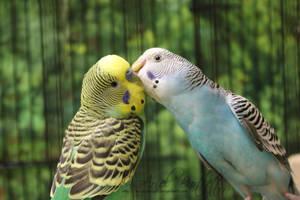 Birdy Kisses by AniuLonewolf