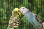 Birdy Kisses