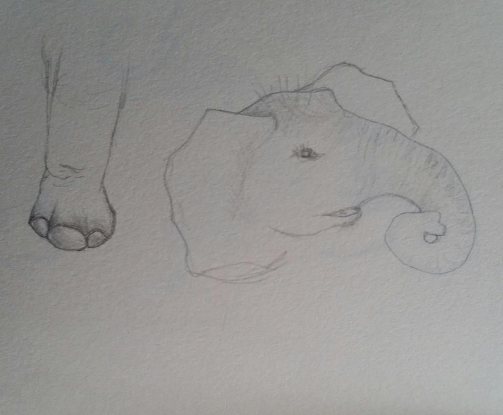 Baby Elephant parts by Amazoniai