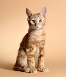 Patrick - red kitty by ingret