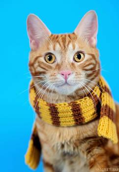 Patrick in scarf