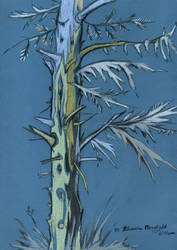 Pine 3.