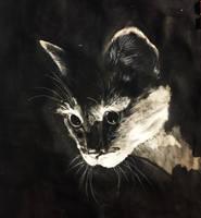 Cat By Chapitanp Dekz1gq by chapitanp