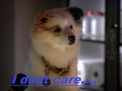 Dog In The Blog Puppy Stan I Dont Care By